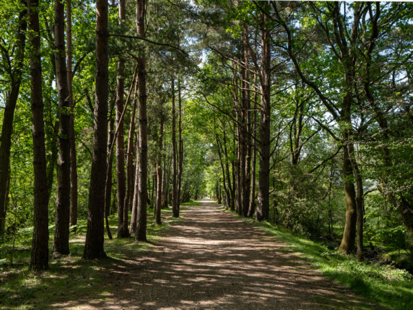 Tree lined cycle path