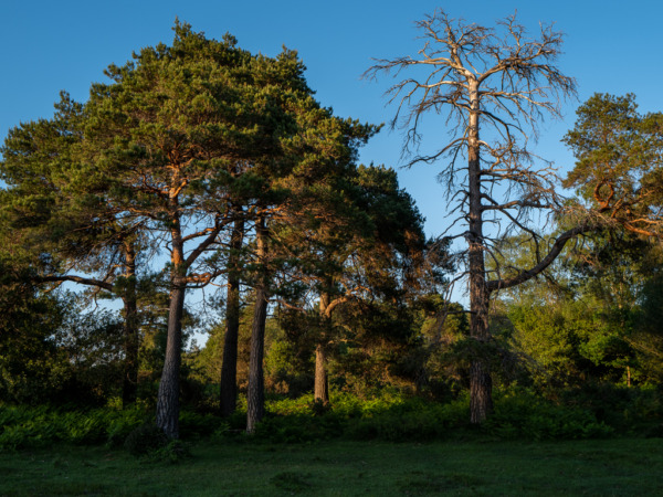 New Forest scenery