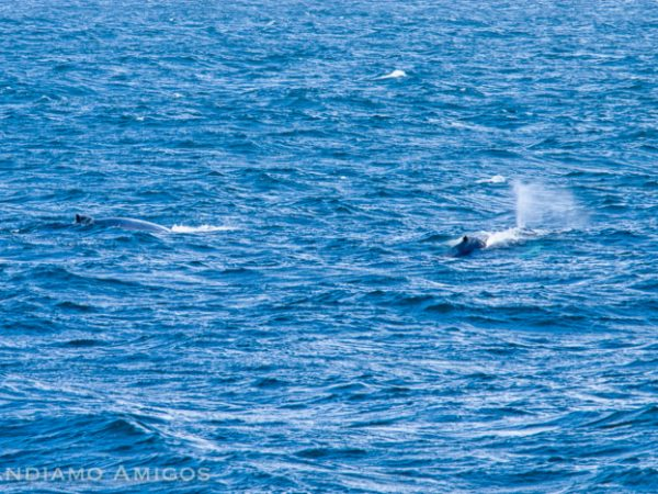 First whale sighting of the day